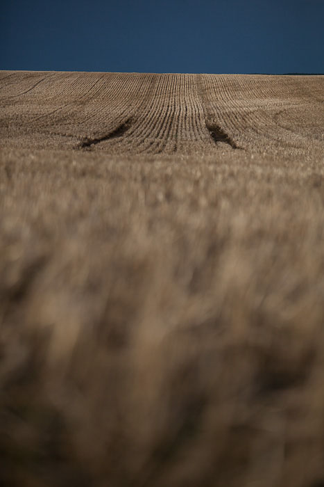 01-Gibaud-Canada-Saskatchewan-Kamsack-Photography-Wheat-Field