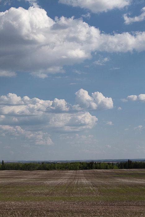 02-Gibaud-Canada-Manitoba-Photography-Wheat
