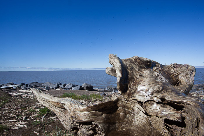 01-Gibaud-Transam-Photography-Canada-NWT-Tuktoyaktuk-Beaufort Sea and Tree