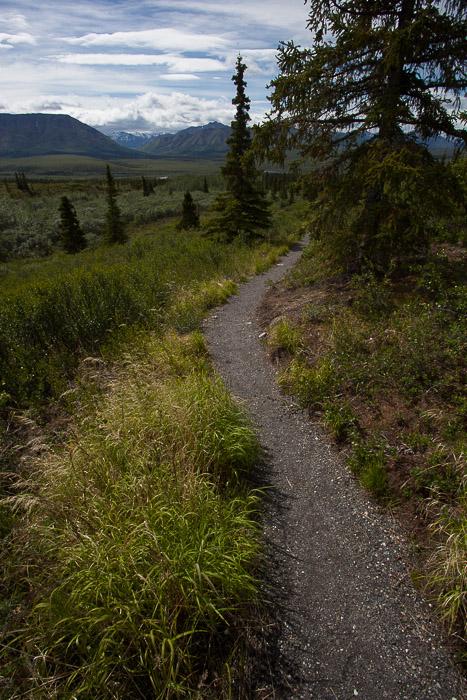 03-Gibaud-Transam-Photography-USA-Alaska-Mont McKinley-Denali National Park
