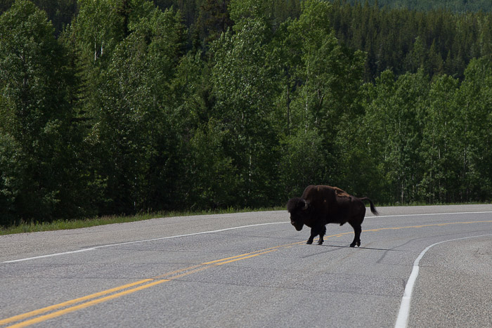 04-Gibaud-Canada-British Columbia-Alaskan Highway-Photography-Buffalo