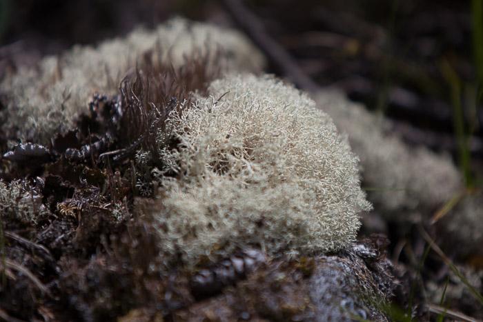 06-Gibaud-Transam-Photography-USA-Alaska-Mont McKinley-Denali National Park