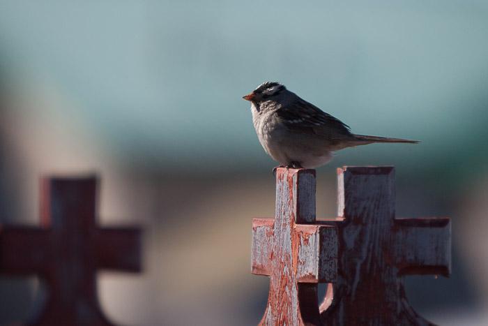 08-Gibaud-Transam-Photography-Canada-NWT-Tuktoyaktuk-Bird