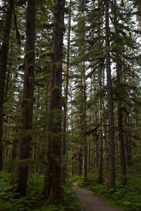 01-Gibaud-Transam-Photography-USA-Alaska-Juneau-Rainforest