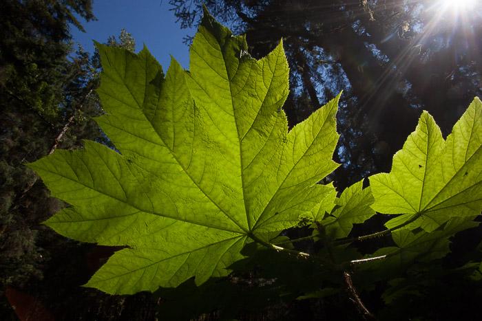 01-Gibaud-Transam-Photography-USA-Alaska-Juneau-rainforest