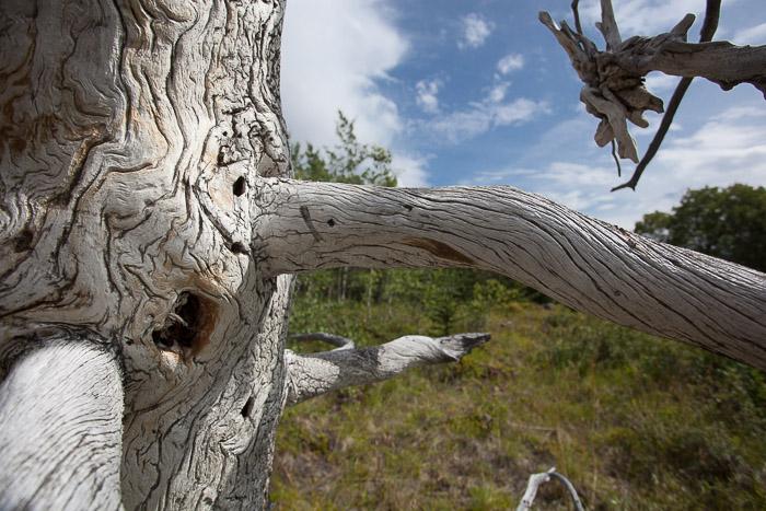 02-Gibaud-Transam-Photography-Canada-Atlin lake-tree