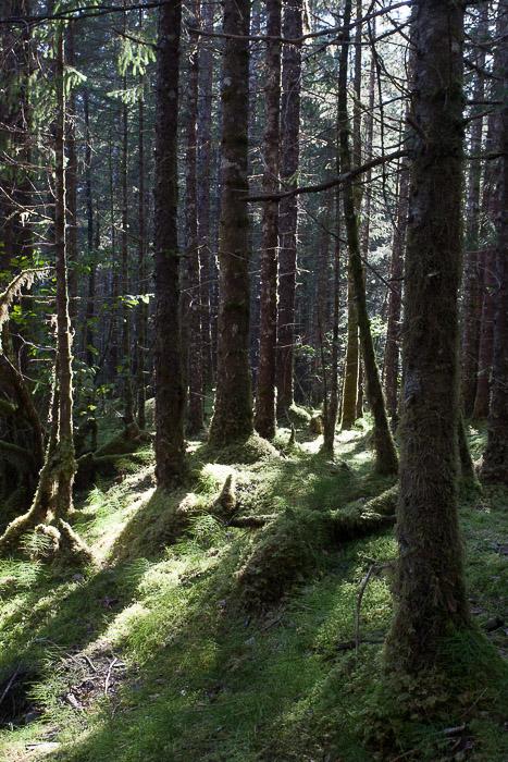 02-Gibaud-Transam-Photography-USA-Alaska-Juneau-Rainforest