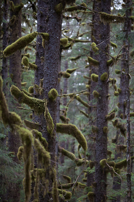 02-Gibaud-Transam-Photography-USA-Alaska-Juneau-rainforest