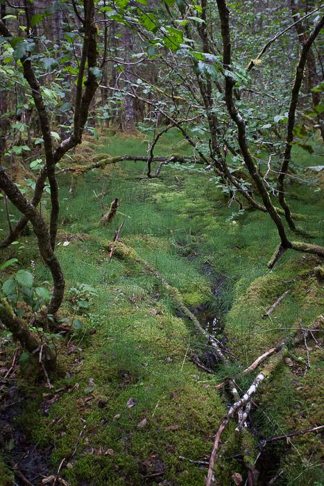 03-Gibaud-Transam-Photography-USA-Alaska-Juneau-Rainforest