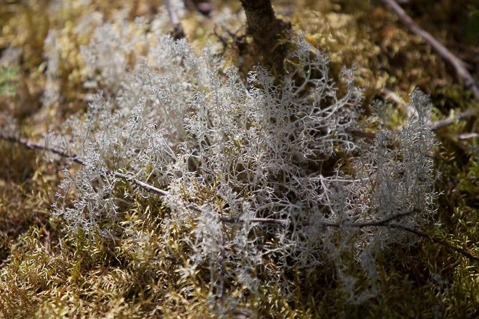 04-Gibaud-Transam-Photography-USA-Alaska-Juneau-rainforest