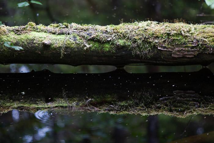 05-Gibaud-Transam-Photography-USA-Alaska-Juneau-rainforest