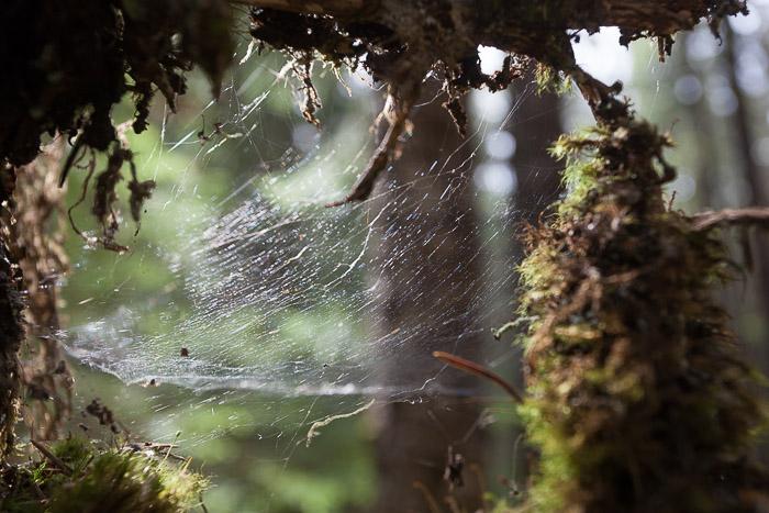 06-Gibaud-Transam-Photography-USA-Alaska-Juneau-rainforest