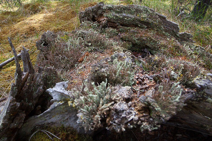 07-Gibaud-Transam-Photography-USA-Alaska-Mont McKinley-Denali National Park-Mousse